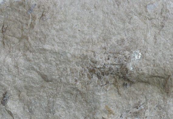 Известняк доломитизированный серый скала
